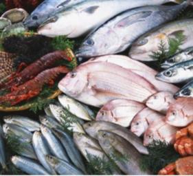 鱼干肉类烘干
