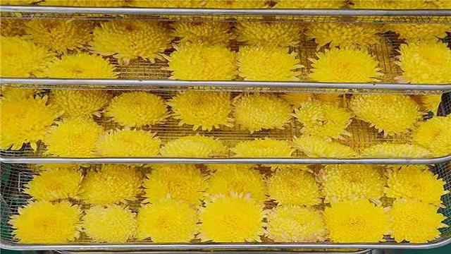 菊花就是要用好的热泵烘干机设备才显得珍贵无比!
