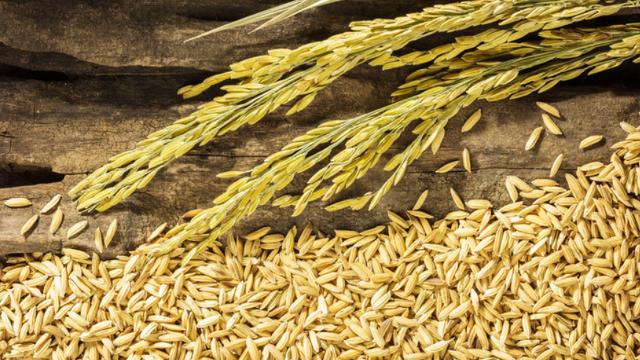 水稻烘干机代替传统自然日晒【主牧安】