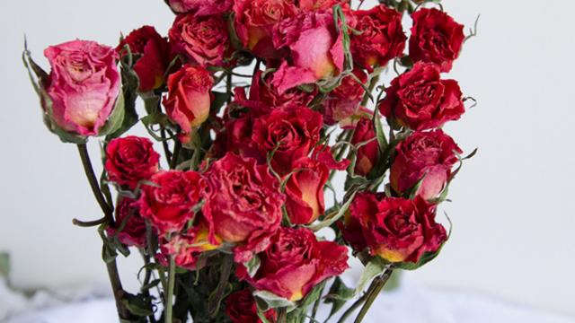 鲜花怎么制作成干花?怎么保存干花的颜色?干花烘干机为您解决【主牧安】