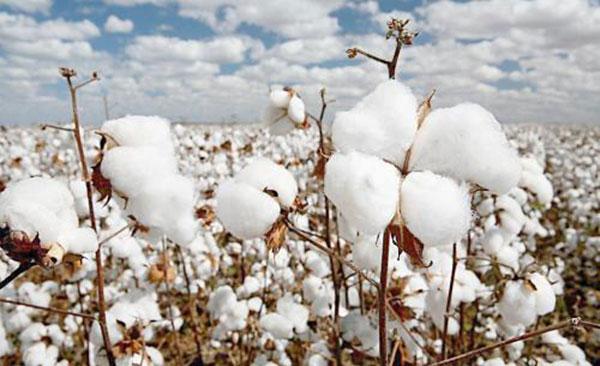 棉花烘干机厂家