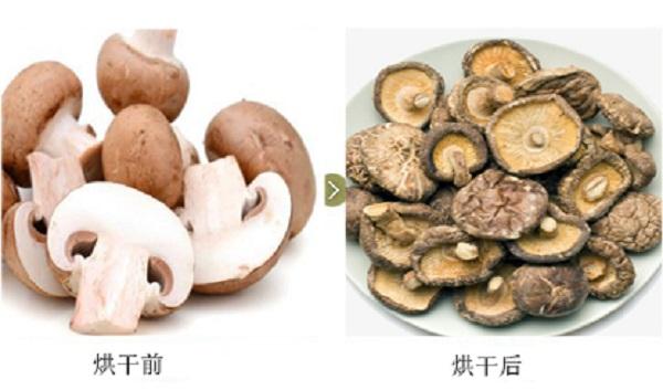香菇对比图