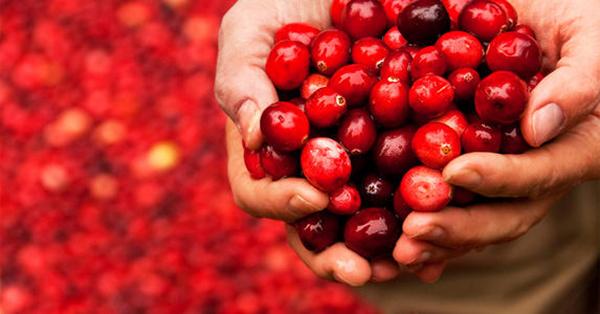 蔓越莓烘干机厂家