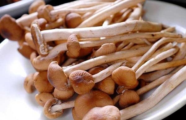 茶树菇烘干机厂家