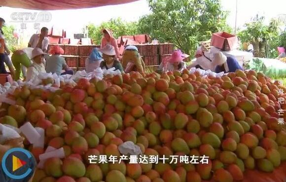 芒果烘干机厂家